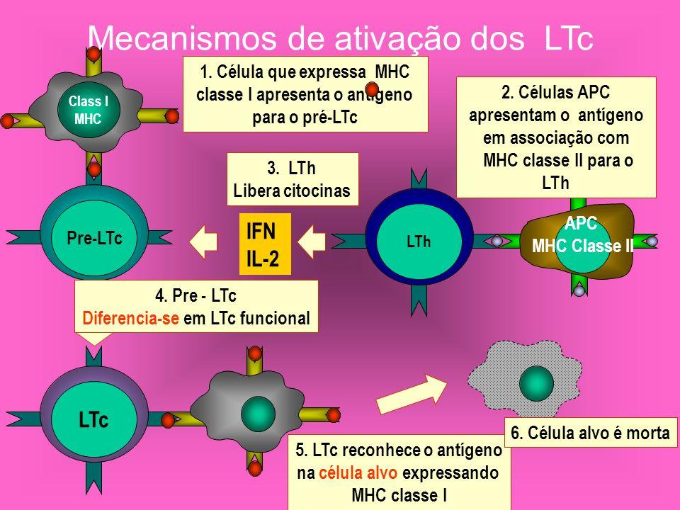 Mecanismos de ativação dos LTc Pre-LTc LTc LTh Class I MHC APC MHC Classe II 1. Célula que expressa MHC classe I apresenta o antigeno para o pré-LTc I
