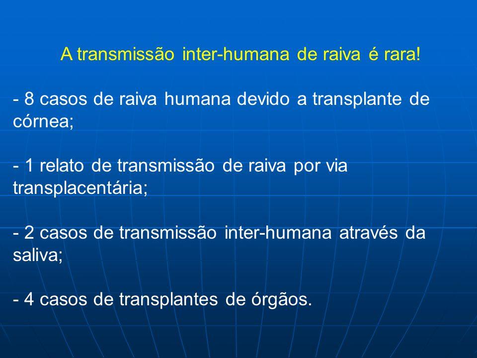 A transmissão inter-humana de raiva é rara! - 8 casos de raiva humana devido a transplante de córnea; - 1 relato de transmissão de raiva por via trans