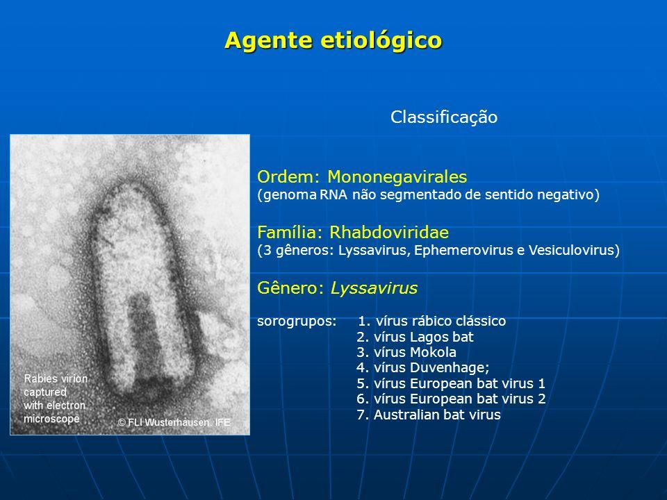 Classificação Ordem: Mononegavirales (genoma RNA não segmentado de sentido negativo) Família: Rhabdoviridae (3 gêneros: Lyssavirus, Ephemerovirus e Ve