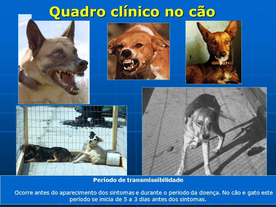 Período de transmissibilidade Ocorre antes do aparecimento dos sintomas e durante o período da doença. No cão e gato este período se inicia de 5 a 3 d