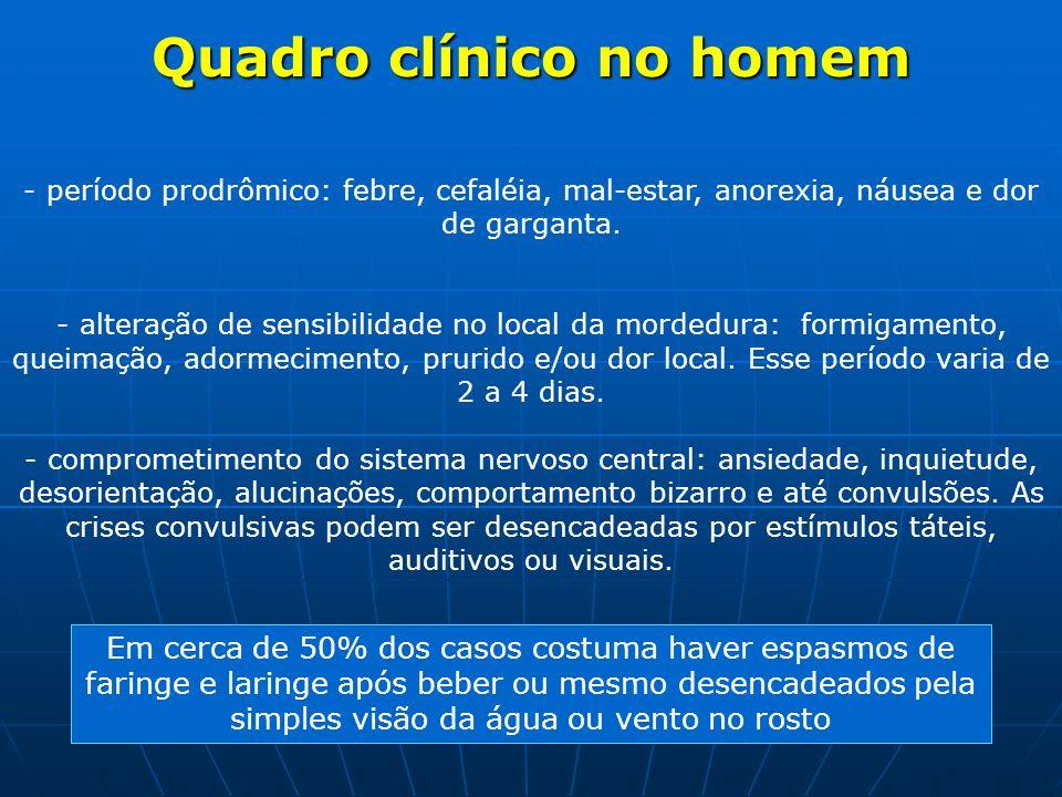 Quadro clínico no homem - período prodrômico: febre, cefaléia, mal-estar, anorexia, náusea e dor de garganta. - alteração de sensibilidade no local da