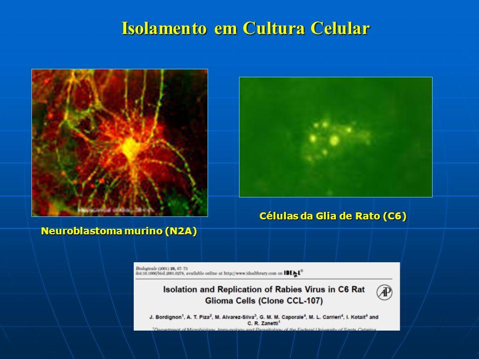 Isolamento em Cultura Celular Células da Glia de Rato (C6) Neuroblastoma murino (N2A)
