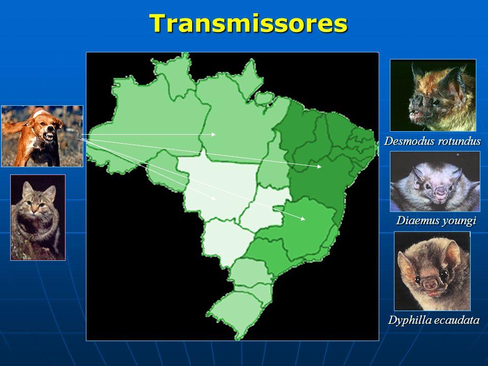 Transmissores Transmissores Desmodus rotundus Diaemus youngi Dyphilla ecaudata