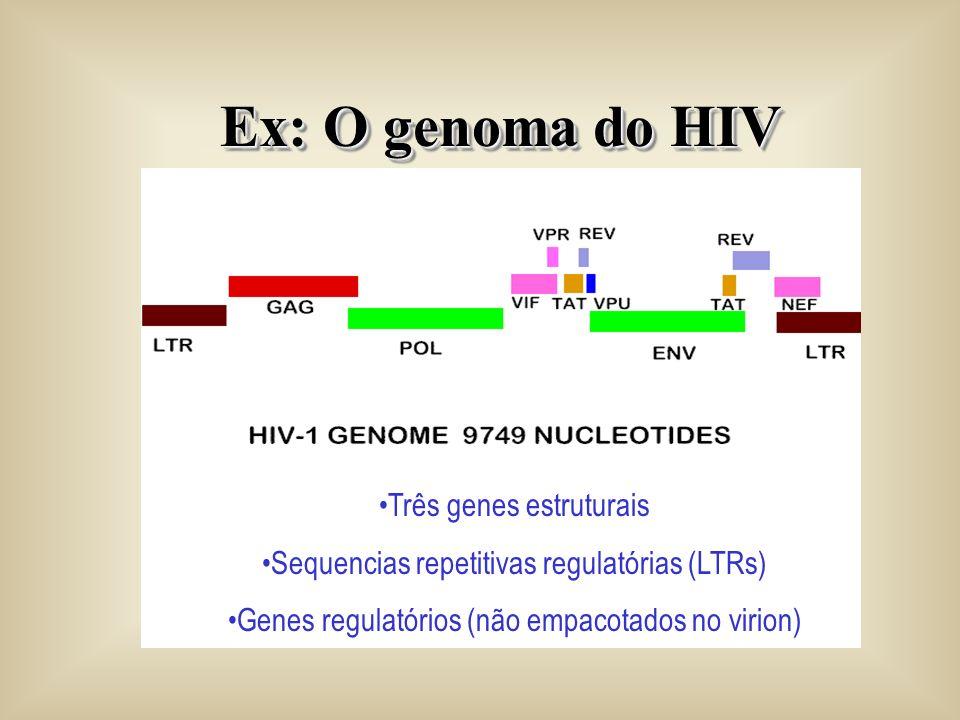 Ex: O genoma do HIV Três genes estruturais Sequencias repetitivas regulatórias (LTRs) Genes regulatórios (não empacotados no virion)