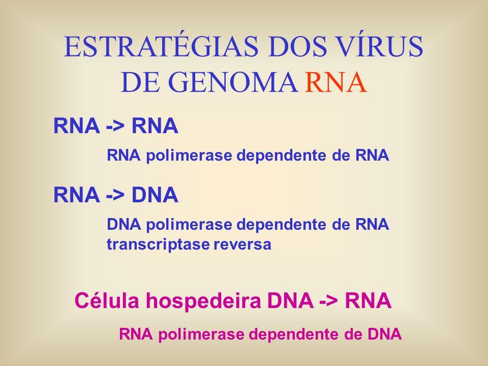 ESTRATÉGIAS DOS VÍRUS DE GENOMA RNA RNA -> RNA RNA polimerase dependente de RNA RNA -> DNA DNA polimerase dependente de RNA transcriptase reversa Célu