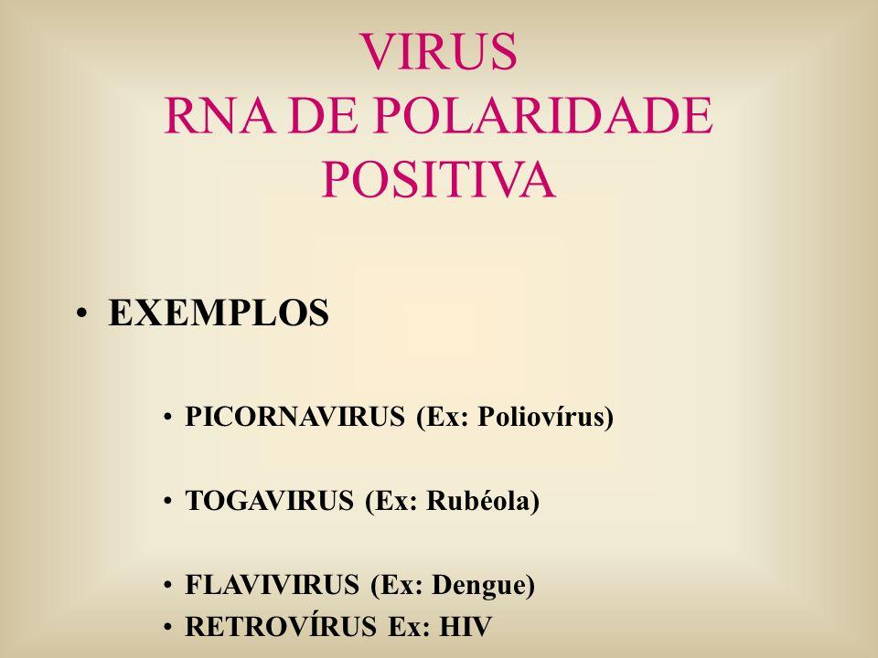 VIRUS RNA DE POLARIDADE POSITIVA EXEMPLOS PICORNAVIRUS (Ex: Poliovírus) TOGAVIRUS (Ex: Rubéola) FLAVIVIRUS (Ex: Dengue) RETROVÍRUS Ex: HIV