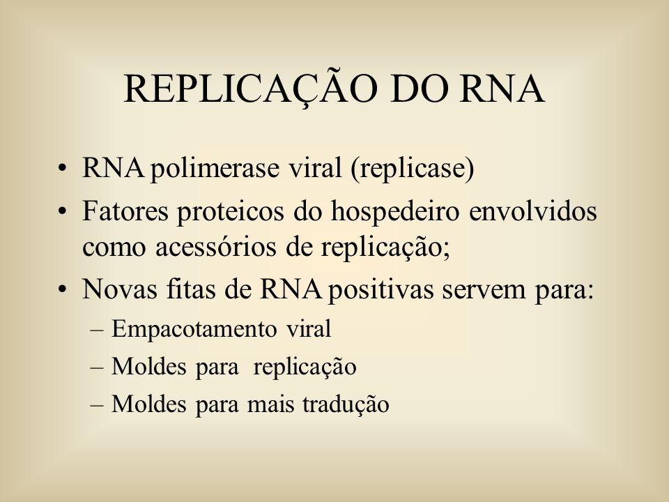 REPLICAÇÃO DO RNA RNA polimerase viral (replicase) Fatores proteicos do hospedeiro envolvidos como acessórios de replicação; Novas fitas de RNA positi