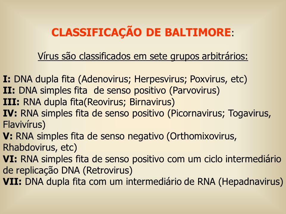 CLASSIFICAÇÃO DE BALTIMORE : Vírus são classificados em sete grupos arbitrários: I: DNA dupla fita (Adenovirus; Herpesvirus; Poxvirus, etc) II: DNA si