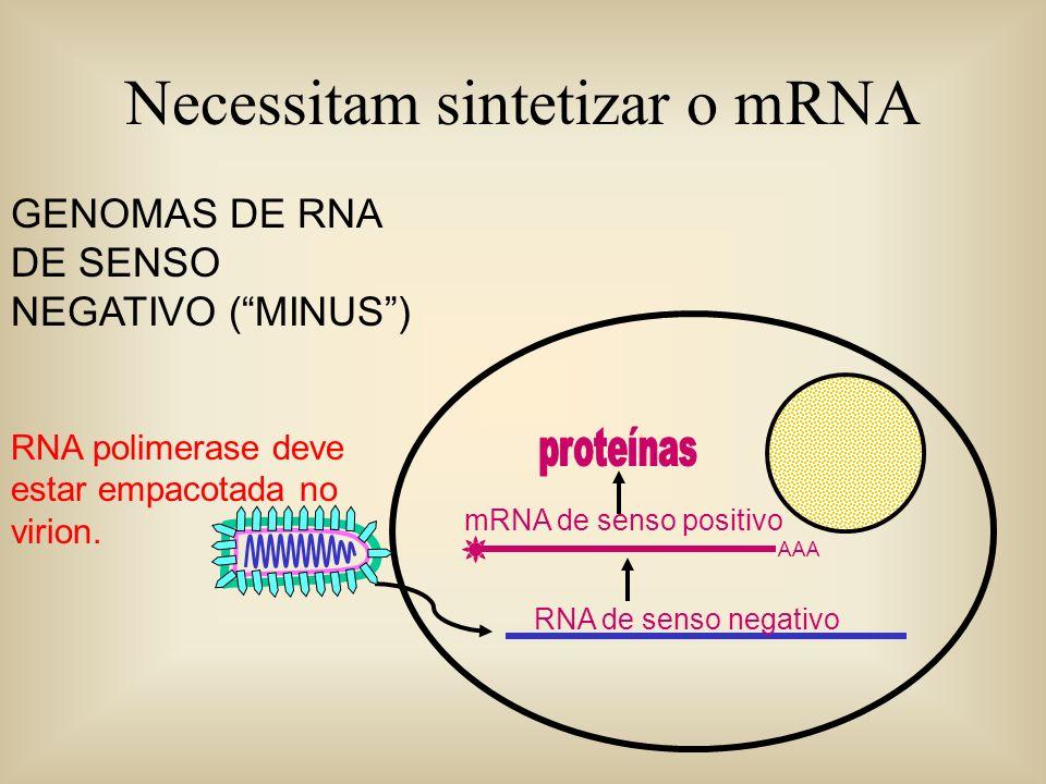 Necessitam sintetizar o mRNA GENOMAS DE RNA DE SENSO NEGATIVO (MINUS) RNA polimerase deve estar empacotada no virion. AAA mRNA de senso positivo RNA d