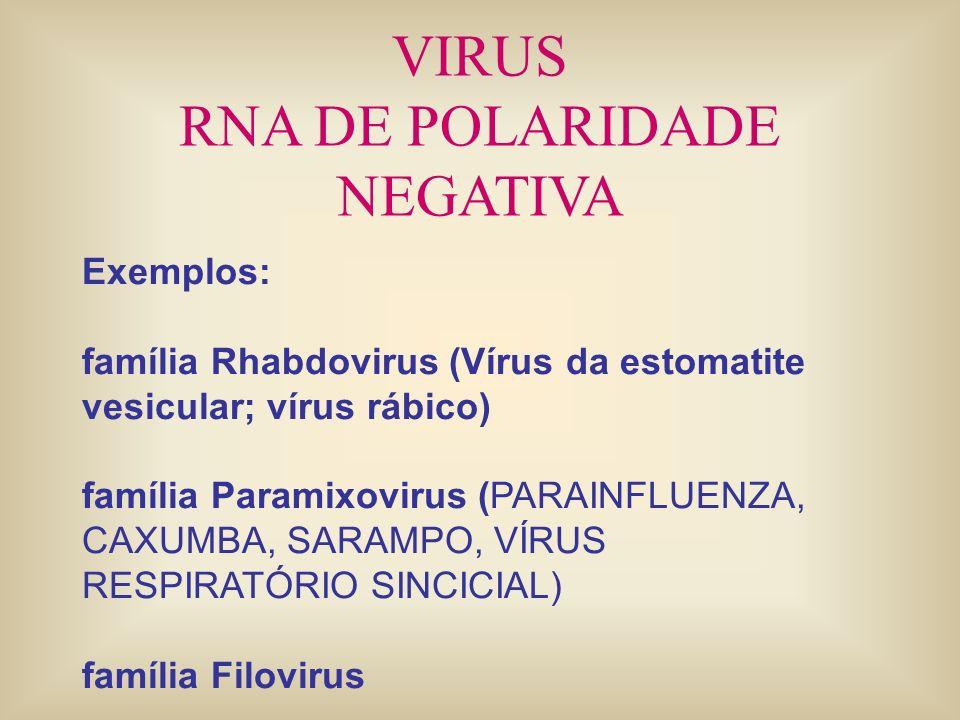 VIRUS RNA DE POLARIDADE NEGATIVA Exemplos: família Rhabdovirus (Vírus da estomatite vesicular; vírus rábico) família Paramixovirus (PARAINFLUENZA, CAX