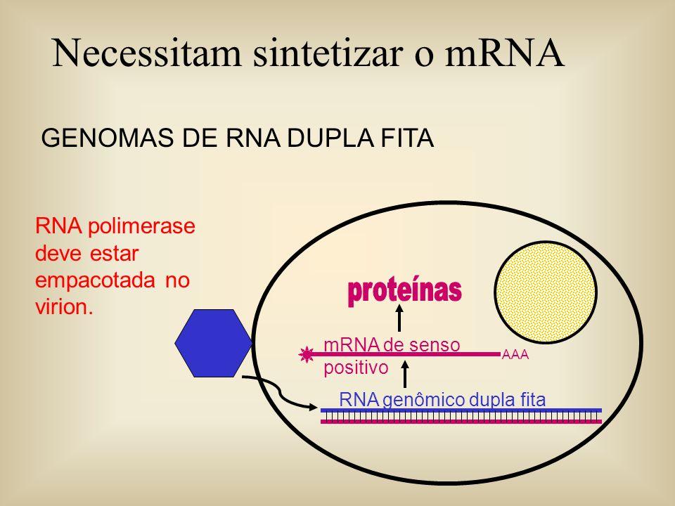 GENOMAS DE RNA DUPLA FITA AAA mRNA de senso positivo RNA genômico dupla fita RNA polimerase deve estar empacotada no virion. Necessitam sintetizar o m
