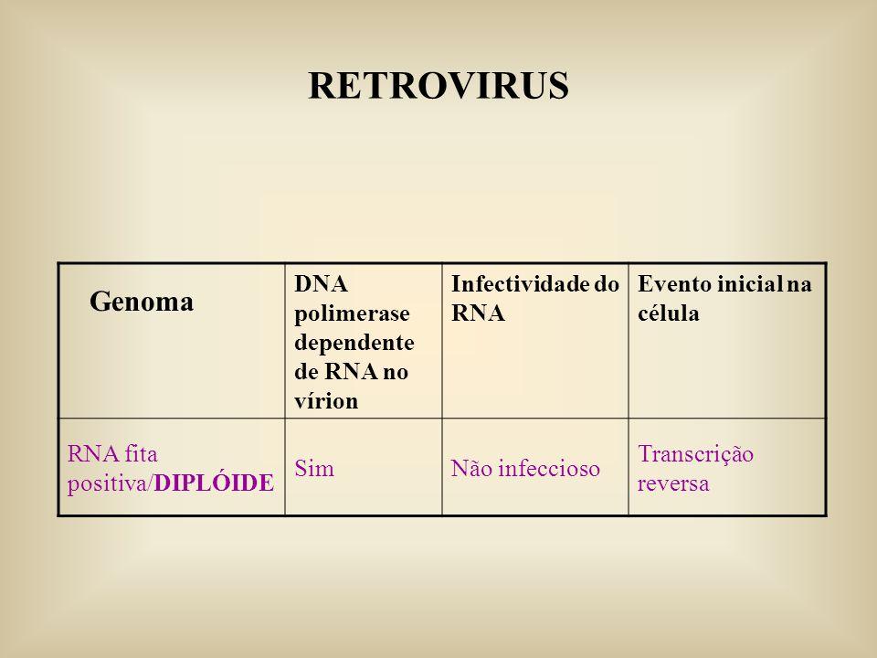 DNA polimerase dependente de RNA no vírion Infectividade do RNA Evento inicial na célula RNA fita positiva/DIPLÓIDE SimNão infeccioso Transcrição reve