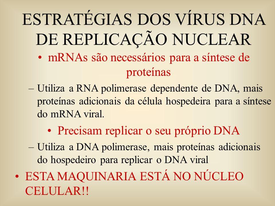 ESTRATÉGIAS DOS VÍRUS DNA DE REPLICAÇÃO NUCLEAR mRNAs são necessários para a síntese de proteínas –Utiliza a RNA polimerase dependente de DNA, mais pr