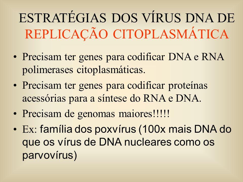 ESTRATÉGIAS DOS VÍRUS DNA DE REPLICAÇÃO CITOPLASMÁTICA Precisam ter genes para codificar DNA e RNA polimerases citoplasmáticas. Precisam ter genes par