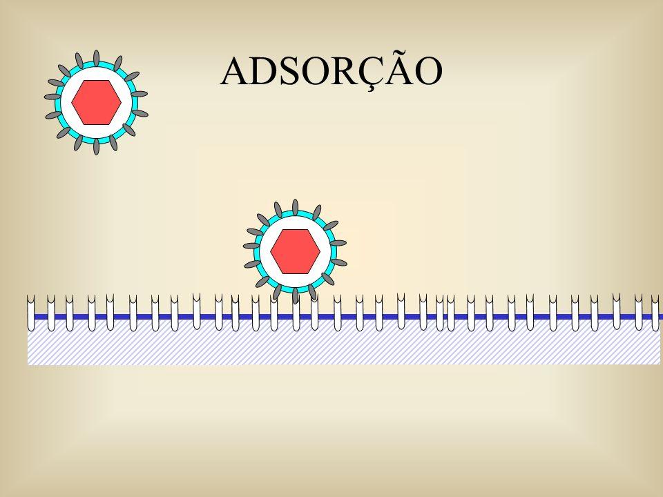 Quando o genoma viral já é um mRNA GENOMAS DE RNA DE SENSO POSITIVO (PLUS) AAA mRNA de senso positivo