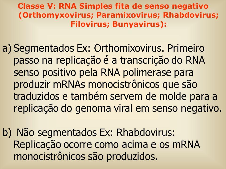 Classe V: RNA Simples fita de senso negativo (Orthomyxovirus; Paramixovirus; Rhabdovirus; Filovirus; Bunyavirus): a)Segmentados Ex: Orthomixovirus. Pr