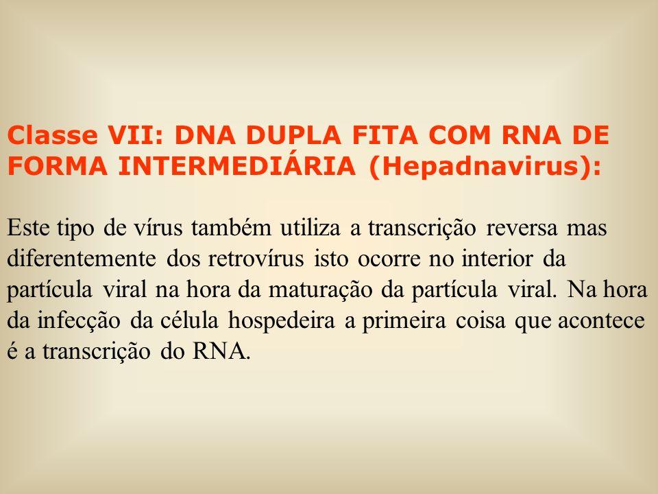 Classe VII: DNA DUPLA FITA COM RNA DE FORMA INTERMEDIÁRIA (Hepadnavirus): Este tipo de vírus também utiliza a transcrição reversa mas diferentemente d