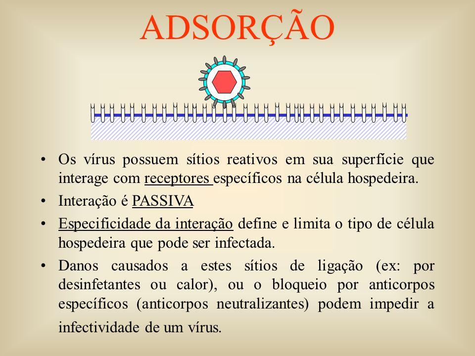 Os vírus possuem sítios reativos em sua superfície que interage com receptores específicos na célula hospedeira. Interação é PASSIVA Especificidade da