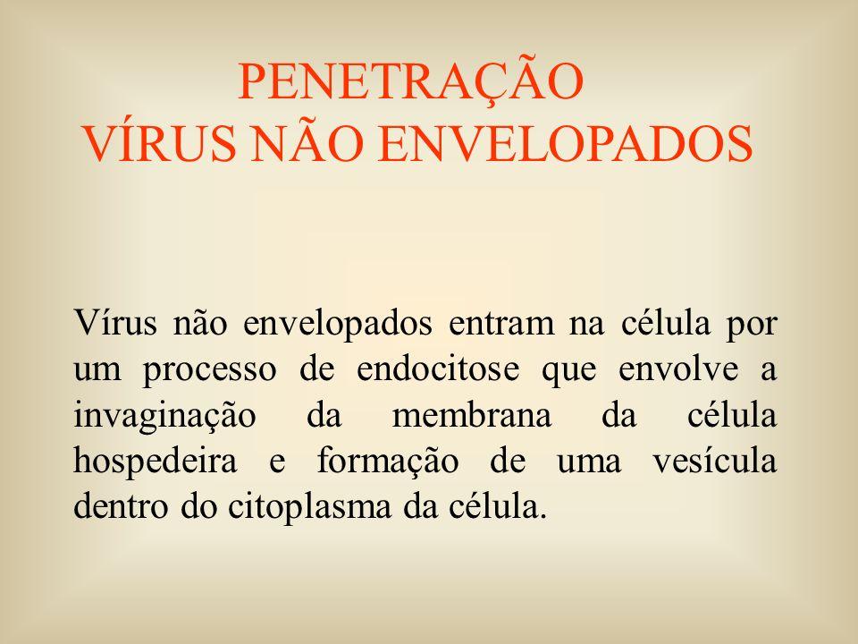 RNA GENÔMICO SENSO POSITIVO AAAAA tradução