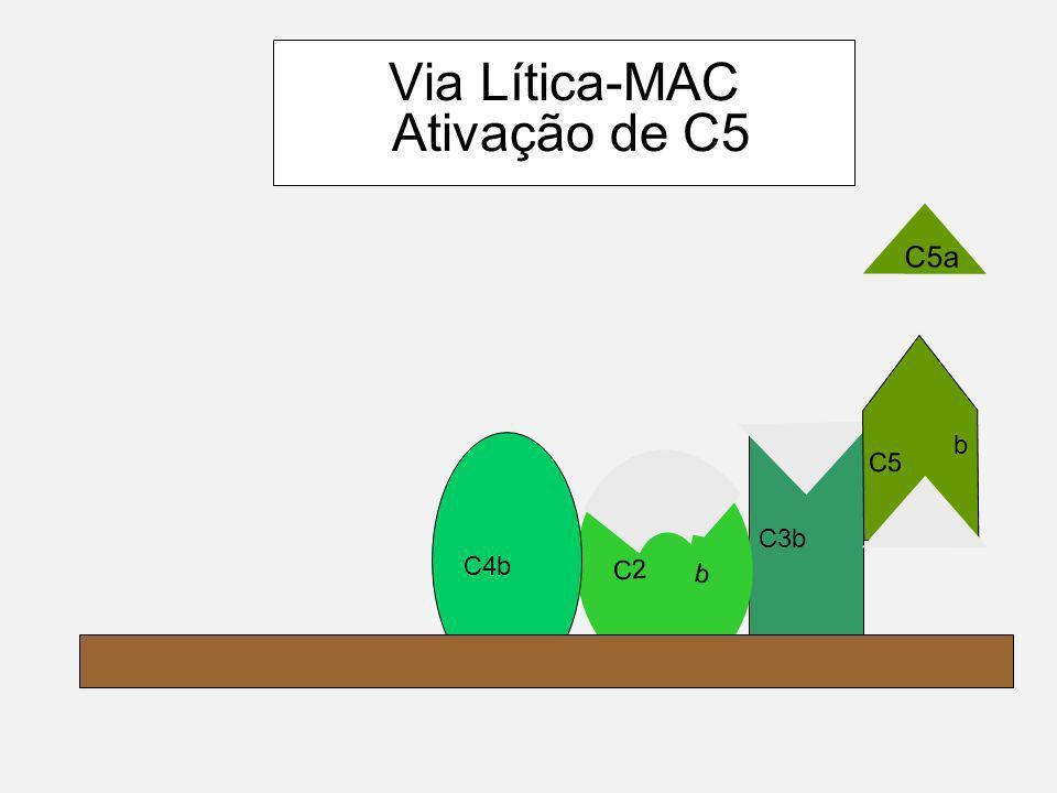Componentes do MAC C6 C9C9 C8 C7 C5