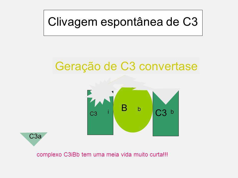 Componentes da primeira fase da Via alternativa C3 B D P