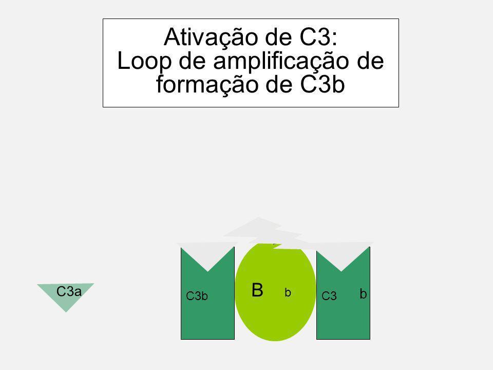 Clivagem espontânea de C3 C3 H2OH2O i B D Geração de C3 convertase complexo C3iBb tem uma meia vida muito curta!!! b C3 C3a b
