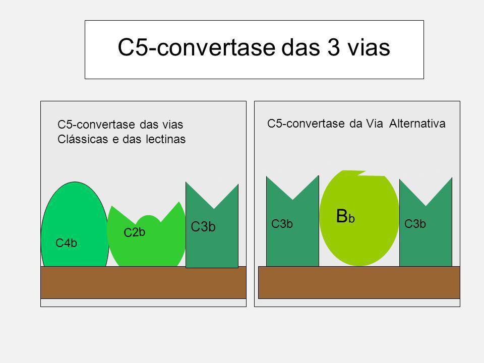 Estabilização de C3b e ativação de C5 C3b C3b encontra um protetor na membrana C3 C3a b B D b P Este C5 convertase é estável e atua na Via alternativa do complemento