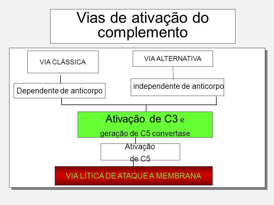 C5-convertase das 3 vias C3b BbBb C5-convertase da Via Alternativa C4b C2b C3b C5-convertase das vias Clássicas e das lectinas