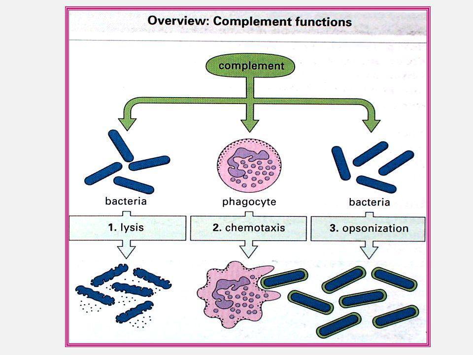 SISTEMA COMPLEMENTO CONSEQÜÊNCIAS Opsonização: -C3b é uma importante opsonina. -Reveste o microrganismo e se liga aos receptores(CR1-4) nos macrófagos