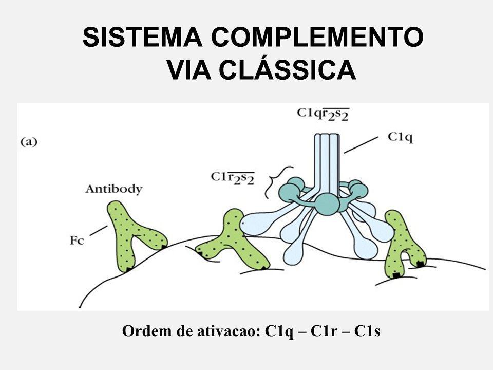 VIA CLÁSSICA É ativada por uma interação (Ag-Ac).É ativada por uma interação (Ag-Ac). A ligação Ag-Ac provoca uma mudança conformacional no Ac, que ab