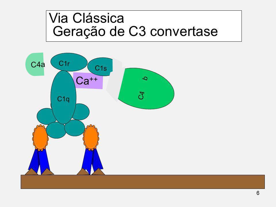 Componentes da primeira fase da Via Clássica C4 C2 C3 Complexo C1 Ca ++ C1r C1s C1q