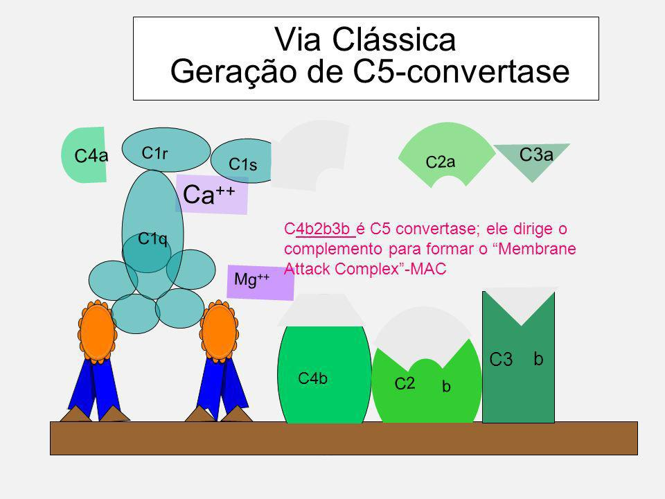 SISTEMA COMPLEMENTO VIA ALTERNATIVA Não há formação do complexo Ag-Ac.Não há formação do complexo Ag-Ac.