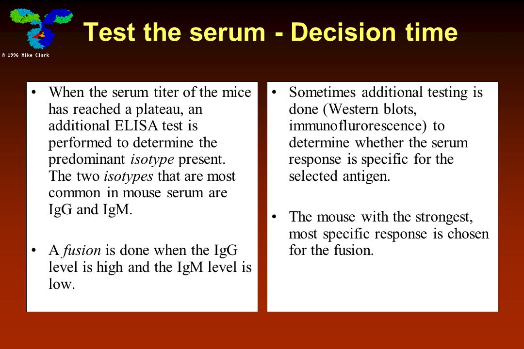 Test the serum - Decision time When the serum titer of the mice has reached a plateau, an additional ELISA test is performed to determine the predomin
