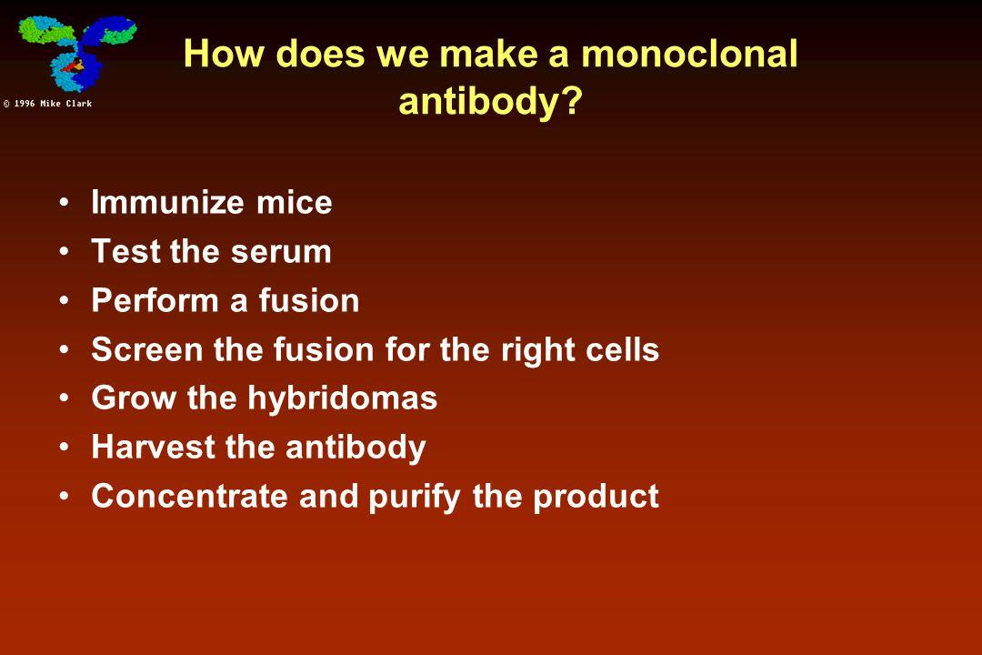 Human MAb production Immune response to mouse antibodies (HAMA response: clearance + disease) HAMA: human anti-mouse antibodies