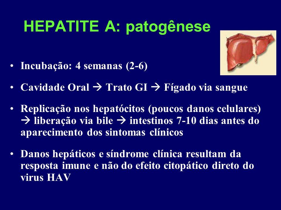 HEPATITE A: patogênese Incubação: 4 semanas (2-6) Cavidade Oral Trato GI Fígado via sangue Replicação nos hepatócitos (poucos danos celulares) liberaç