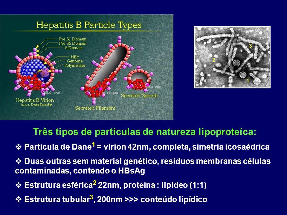 Três tipos de partículas de natureza lipoproteíca: Partícula de Dane 1 = vírion 42nm, completa, simetria icosaédrica Duas outras sem material genético