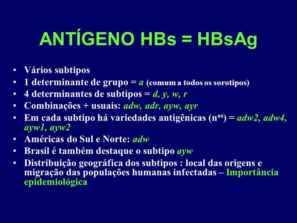 ANTÍGENO HBs = HBsAg Vários subtipos 1 determinante de grupo = a (comum a todos os sorotipos) 4 determinantes de subtipos = d, y, w, r Combinações + usuais: adw, adr, ayw, ayr Em cada subtipo há variedades antigênicas (n os ) = adw2, adw4, ayw1, ayw2 Américas do Sul e Norte: adw Brasil é também destaque o subtipo ayw Distribuição geográfica dos subtipos : local das origens e migração das populações humanas infectadas – Importância epidemiológica
