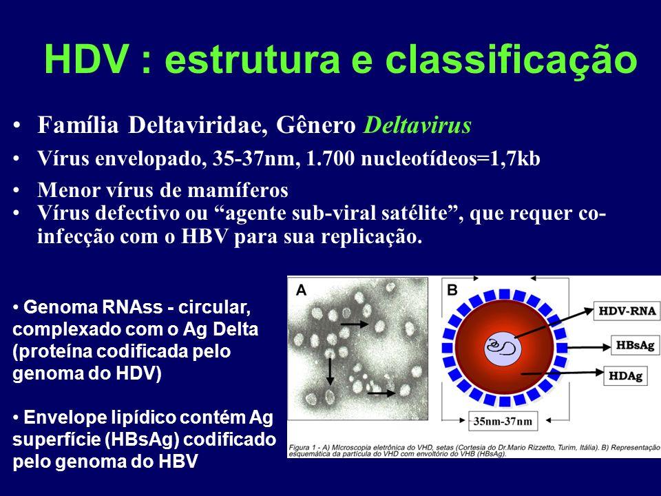 HDV : estrutura e classificação Família Deltaviridae, Gênero Deltavirus Vírus envelopado, 35-37nm, 1.700 nucleotídeos=1,7kb Menor vírus de mamíferos Vírus defectivo ou agente sub-viral satélite, que requer co- infecção com o HBV para sua replicação.