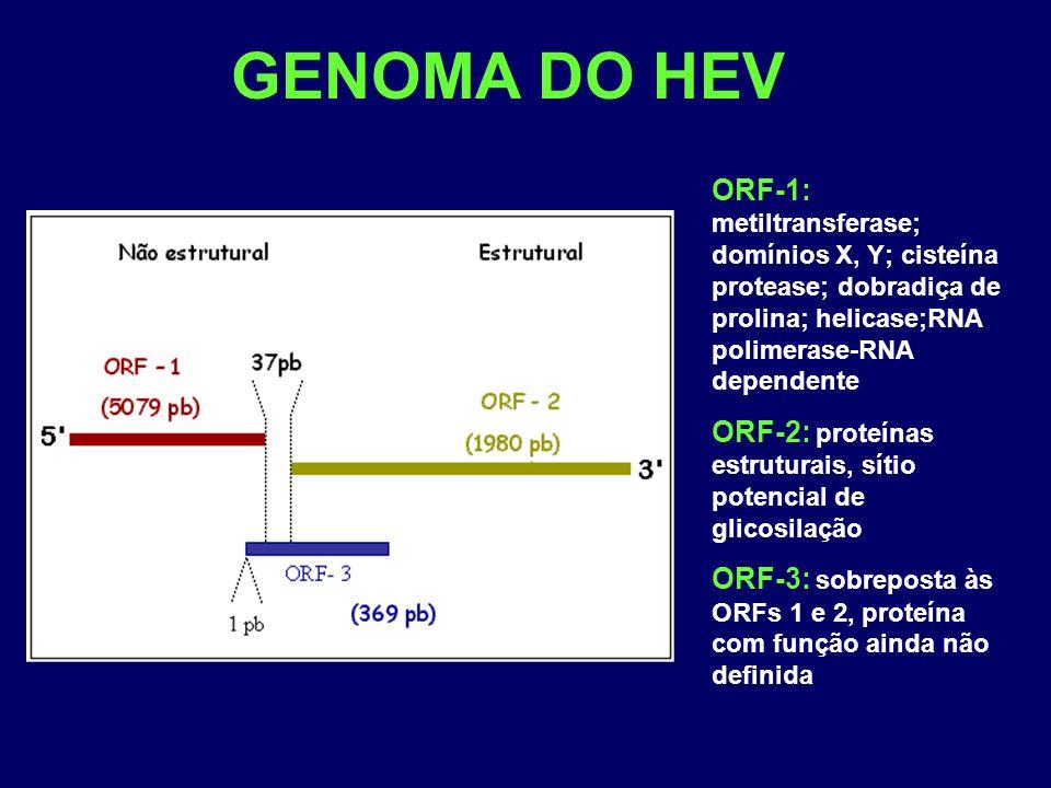 GENOMA DO HEV ORF-1: metiltransferase; domínios X, Y; cisteína protease; dobradiça de prolina; helicase;RNA polimerase-RNA dependente ORF-2: proteínas estruturais, sítio potencial de glicosilação ORF-3: sobreposta às ORFs 1 e 2, proteína com função ainda não definida