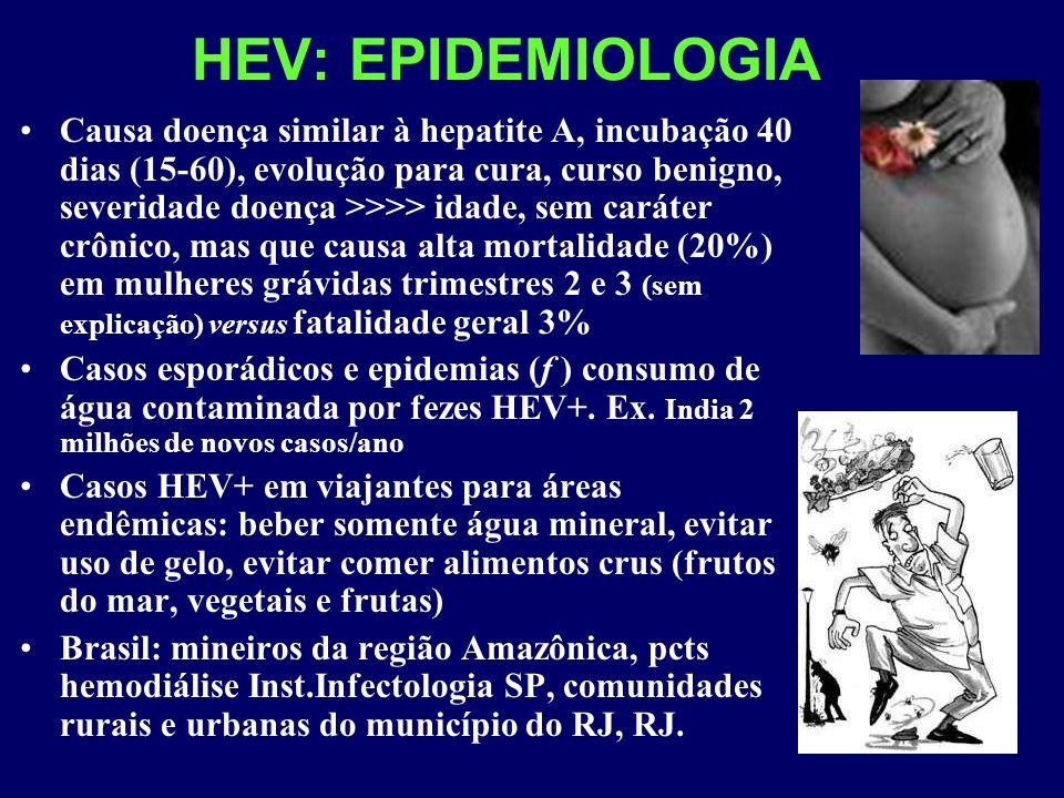 HEV: EPIDEMIOLOGIA Causa doença similar à hepatite A, incubação 40 dias (15-60), evolução para cura, curso benigno, severidade doença >>>> idade, sem caráter crônico, mas que causa alta mortalidade (20%) em mulheres grávidas trimestres 2 e 3 (sem explicação) versus fatalidade geral 3% Casos esporádicos e epidemias (f ) consumo de água contaminada por fezes HEV+.
