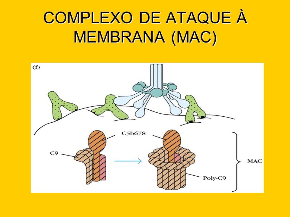 COMPLEXO DE ATAQUE À MEMBRANA (MAC)