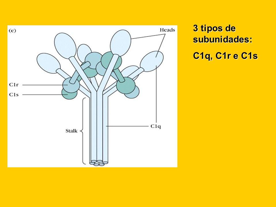 3 tipos de subunidades: C1q, C1r e C1s