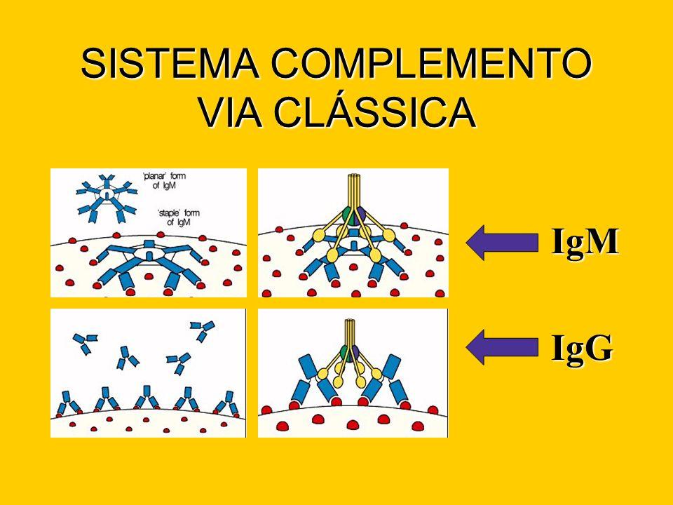 SISTEMA COMPLEMENTO VIA CLÁSSICA IgM IgG