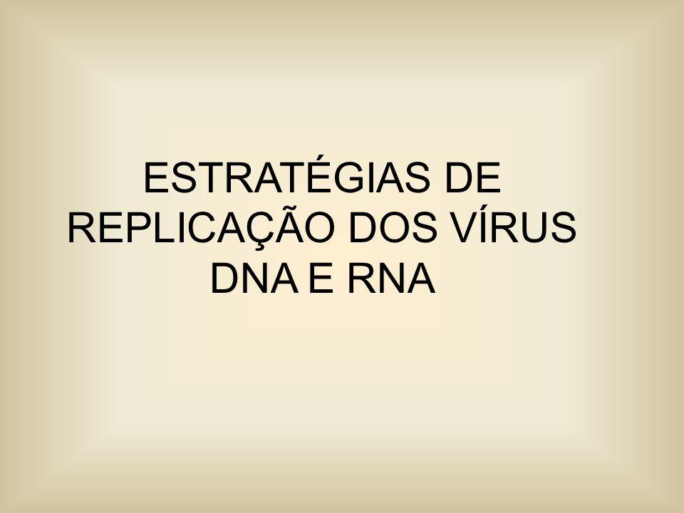 CLASSIFICAÇÃO DE BALTIMORE : Vírus são classificados em sete grupos arbitrários: I: DNA dupla fita (Adenovirus; Herpesvirus; Poxvirus, etc) II: DNA simples fita de senso positivo (Parvovirus) III: RNA dupla fita(Reovirus; Birnavirus) IV: RNA simples fita de senso positivo (Picornavirus; Togavirus, Flavivírus) V: RNA simples fita de senso negativo (Orthomixovirus, Rhabdovirus, etc) VI: RNA simples fita de senso positivo com um ciclo intermediário de replicação DNA (Retrovirus) VII: DNA dupla fita com um intermediário de RNA (Hepadnavirus)