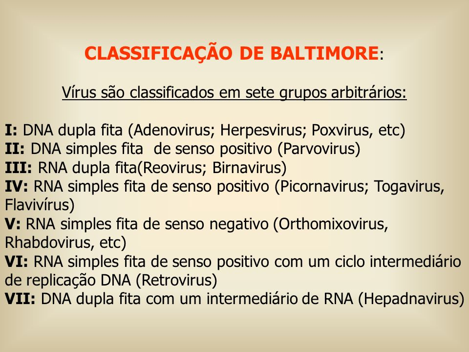 RHABDOVIRUS EXEMPLOS –Vírus da estomatite vesicular (VSV) –Vírus rábico Dr FS Murphy http://www.vetnet.ucdavis.edu/fam_graphics/download.html