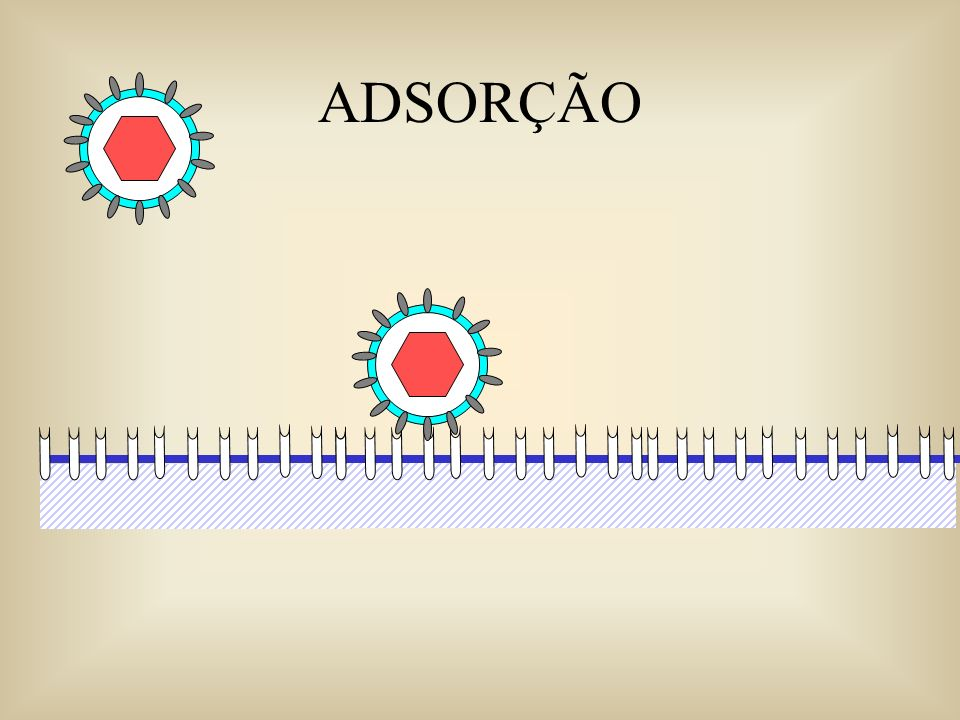 Os vírus possuem sítios reativos em sua superfície que interage com receptores específicos na célula hospedeira.