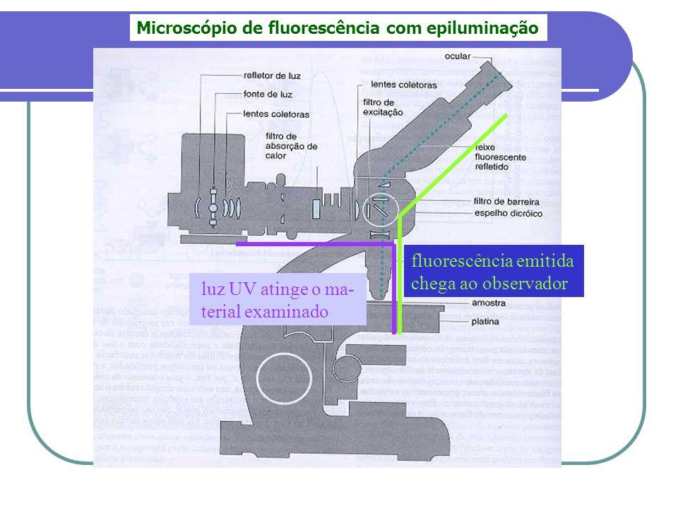 Microscópio de fluorescência com epiluminação luz UV atinge o ma- terial examinado fluorescência emitida chega ao observador
