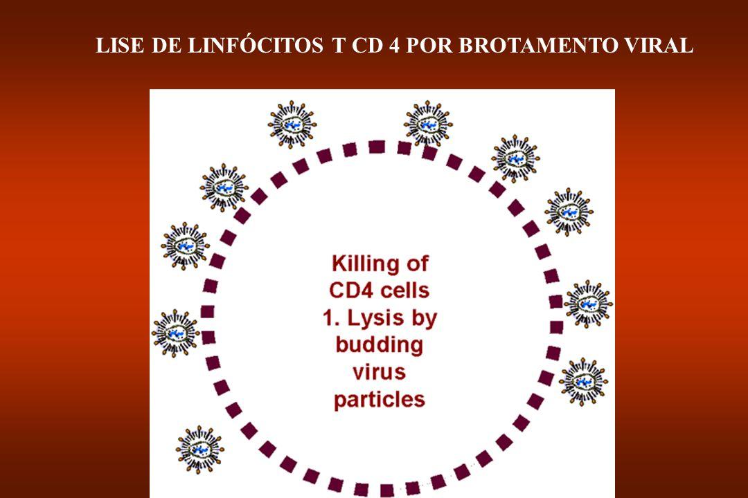 LISE DE LINFÓCITOS T CD 4 POR BROTAMENTO VIRAL