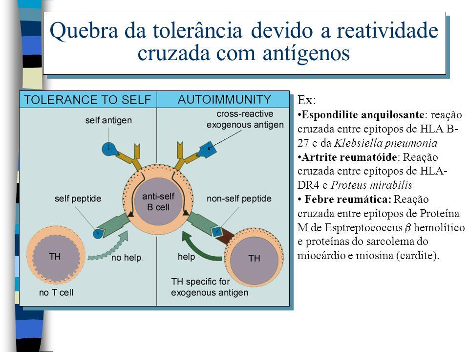 Quebra da tolerância devido a reatividade cruzada com antígenos Ex: Espondilite anquilosante: reação cruzada entre epítopos de HLA B- 27 e da Klebsiel