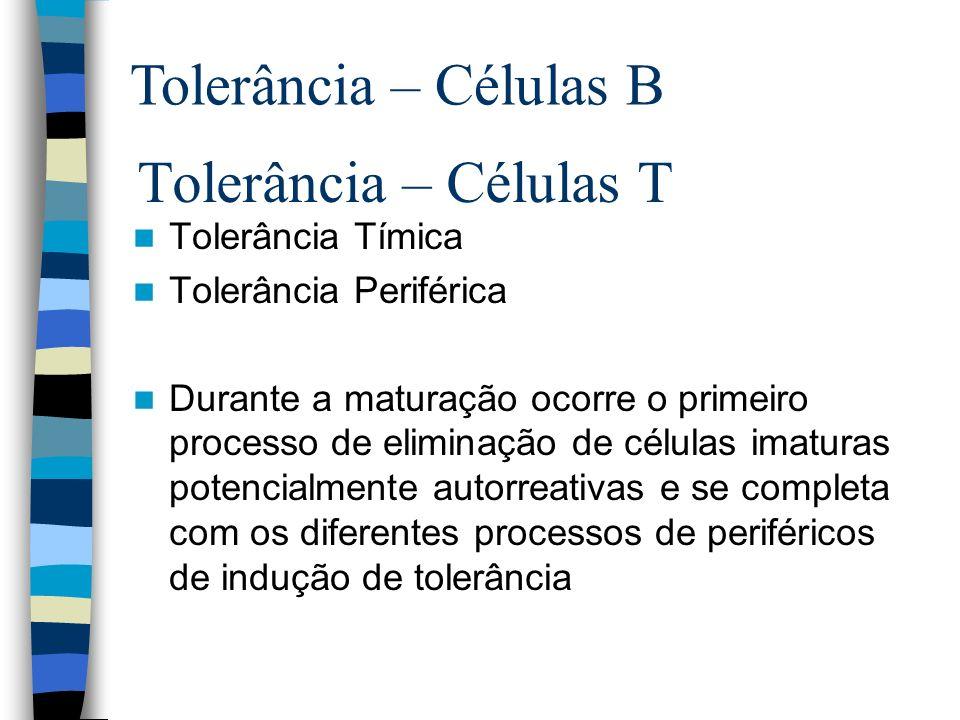 Tolerância – Células T Tolerância Tímica Tolerância Periférica Durante a maturação ocorre o primeiro processo de eliminação de células imaturas potenc